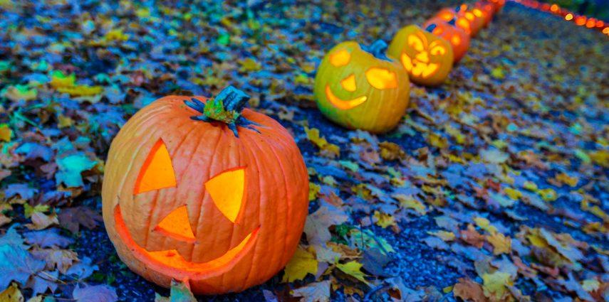 Petits Et Grands, Enfilez Vos Plus Beaux Costumes Car Voici Halloween !  Célébrée Le 31 Octobre, Cette Fête Très Populaire En Amérique Du Nord Est  Lu0027occasion ...